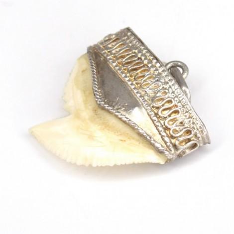 RAR : Amuletă veche indiană cu dinte de rechin-tigru | montură în argint | cca.1880